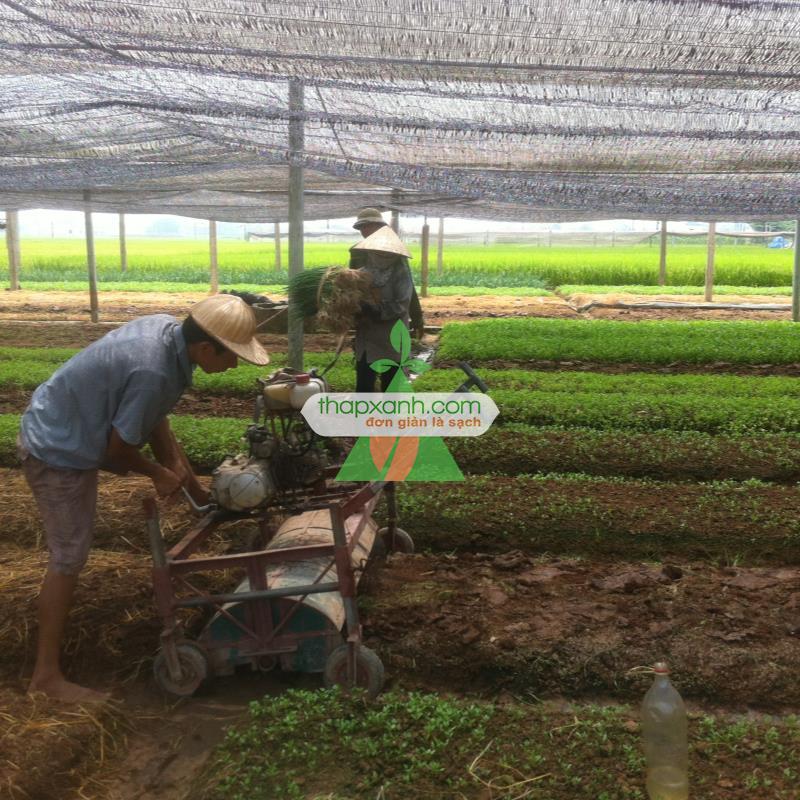Đất sạch Thapxanh ds20 (20dm3)