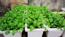 Ảnh của Đất Tribat dinh dưỡng (túi 5dm3)