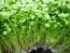 Ảnh của Đất Tribat trồng rau mầm (20dm3) 10kg