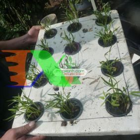 Ảnh của Thùng trồng rau thủy canh (cơ bản)