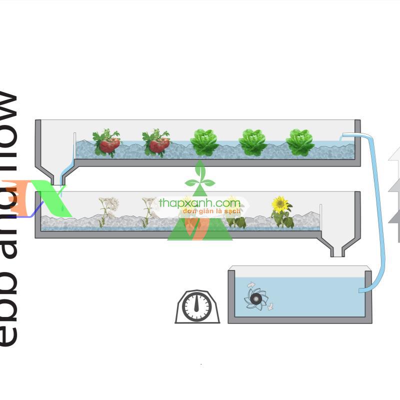 Các vấn đề cần chú ý khi trồng Thủy Canh