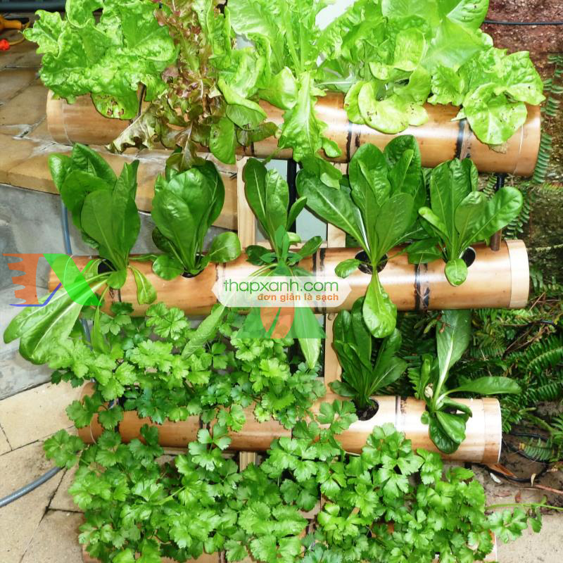 Các loại rau củ phổ biến trồng bằng phương pháp Thủy Canh