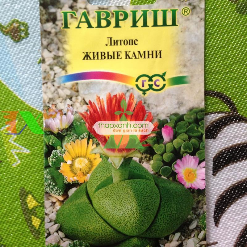 Hạt giống hoa Sỏi (hoa Thạch Lan)