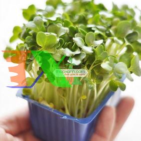 Ảnh của Hạt giống rau mầm cải italy
