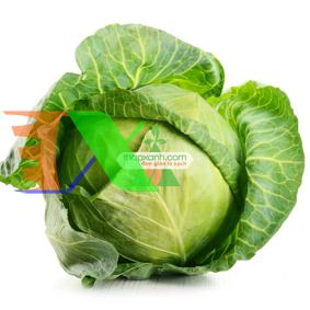 Picture of Hạt giống Bắp cải