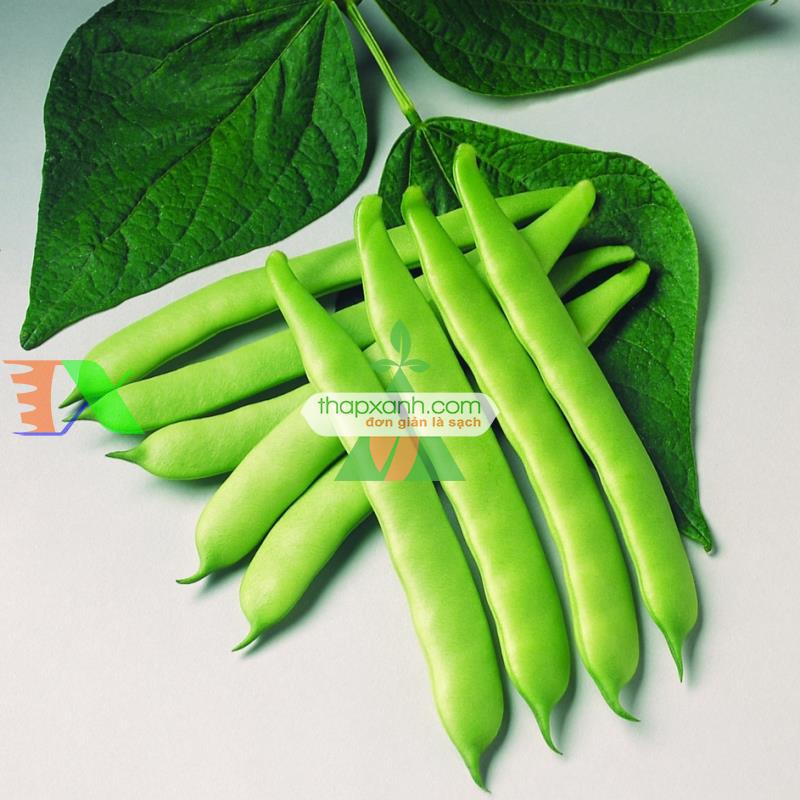 Hạt giống đậu cove lùn (cô ve bụi)