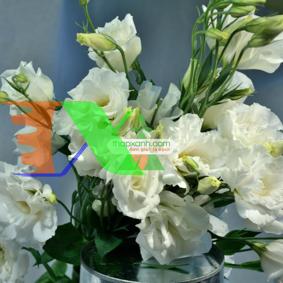 Ảnh của Hạt giống Hoa Cát Tường (trắng)