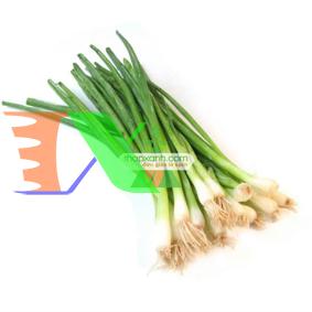 Picture of Hạt giống rau Hành Hoa