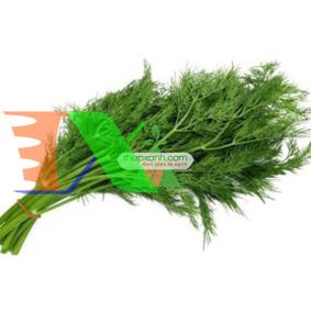 Picture of Hạt giống rau thì là bốn mùa