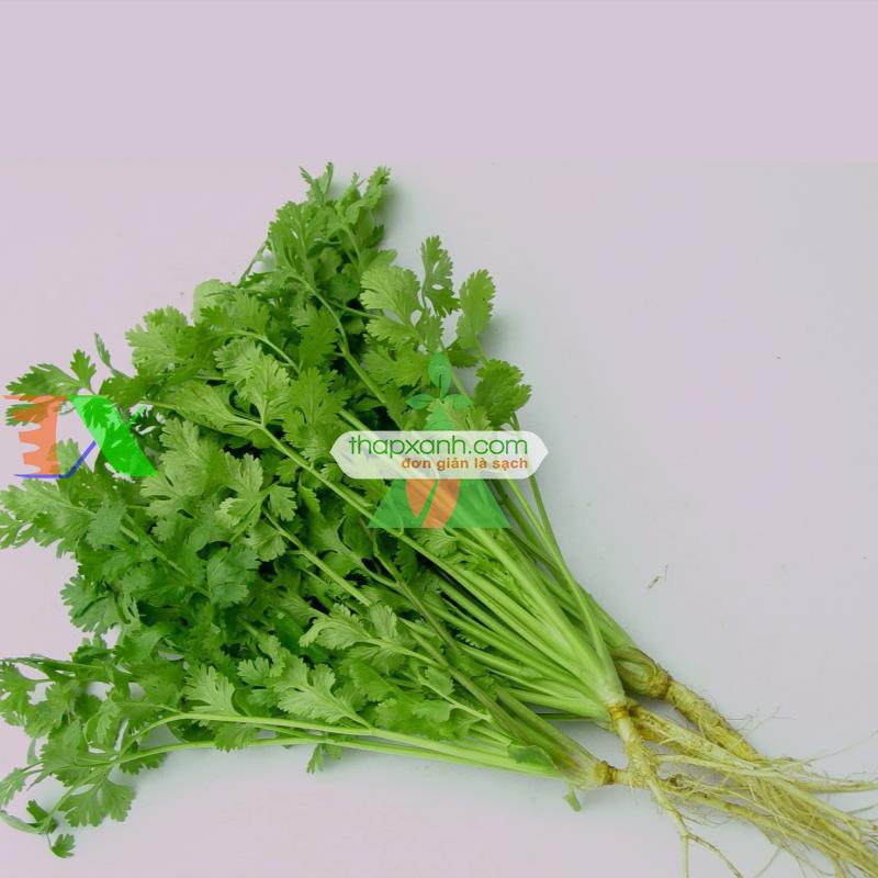 Hạt giống rau Mùi Tía (Ngò Rí)