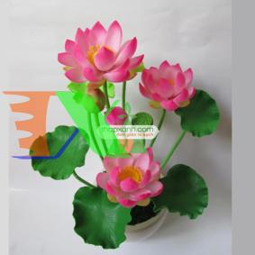Picture of Cây Hoa Sen Nhật mini