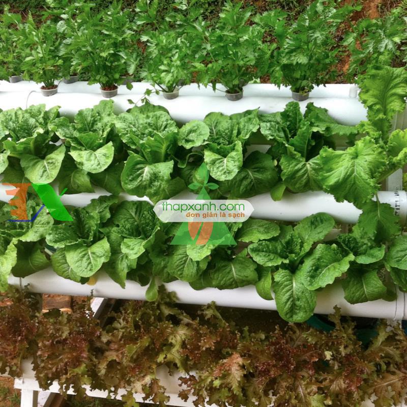 Lắp đặt hệ thống trồng rau thủy canh tại nhà