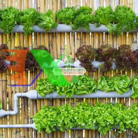 Ảnh của Lắp đặt hệ thống trồng rau thủy canh tại nhà