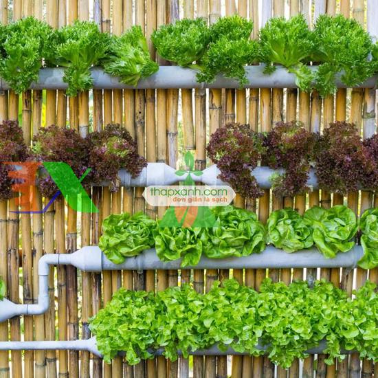 Picture of Lắp đặt hệ thống trồng rau thủy canh tại nhà