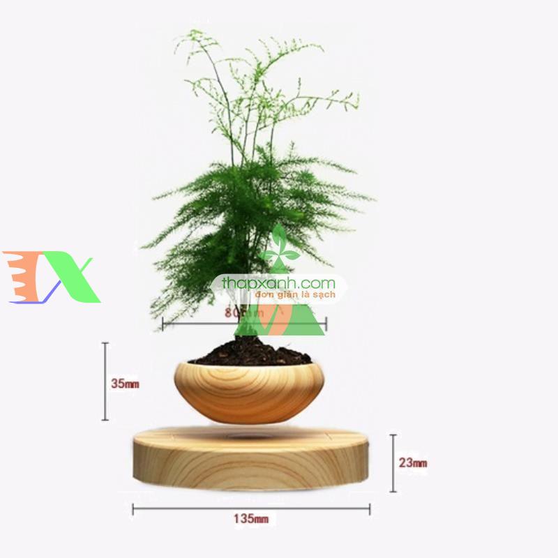 Chậu cây bay (Air bonsai) (gỗ)
