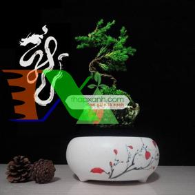 Ảnh của Chậu cây bay (Air bonsai) (sứ, TX_AB002)
