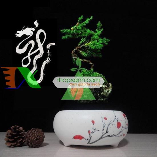 Picture of Chậu cây bay (Air bonsai) (sứ, TX_AB002)