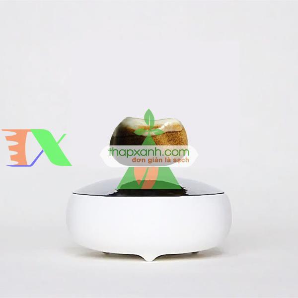 Chậu cây bay (Air bonsai) (sứ, TX_AB002)