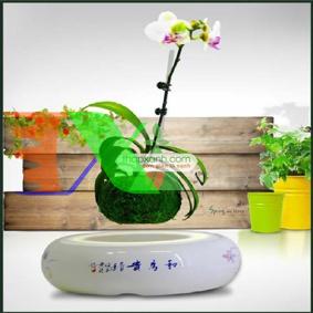 Ảnh của Chậu cây bay (Air bonsai) (sứ, TX_AB003)