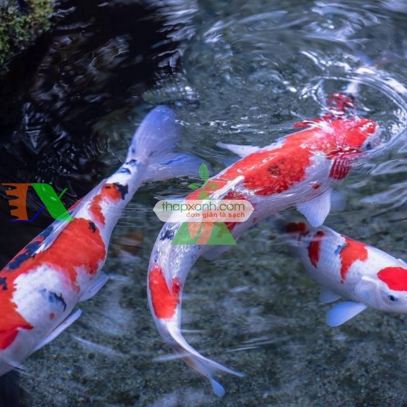 Thức ăn cho cá (dạng viên)