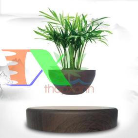 Ảnh của Chậu cây bay (Air bonsai) (gỗ nâu)