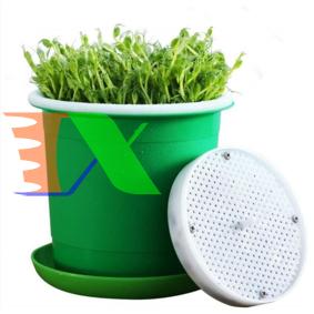 Picture of Chậu trồng giá đỗ KOI-15, Khay trồng rau mầm, Máy trồng đậu hà lan đá Maifan