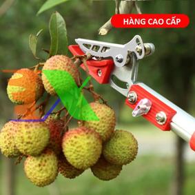 Ảnh của Dụng cụ hái quả HQ-3M, Cắt trái cây trên cao có kẹp giữ (3m), Sào hái Nhãn, Vải