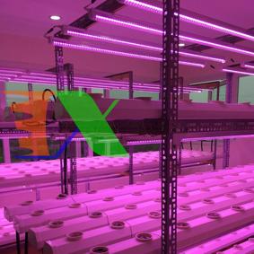 Ảnh của Đèn trồng cây T8-0609 9W, Đèn nuôi cấy mô, Đèn led trồng rau trong nhà (0.6m)