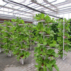 Picture for category Hydroponic towers