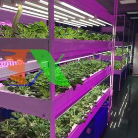 Ảnh của Đèn trồng cây T8-0618 18W, Đèn nuôi cấy mô, Đèn led trồng rau trong nhà (0.6m)