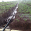 Ảnh của Dây tưới phun mưa Micro spray tube N45.28, Dây tưới phun mưa PE mềm dày 0.2 mm 5 mắt