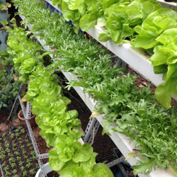 Picture for category Hydroponics & Aquaponics