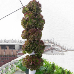 Picture for category Vertical garden