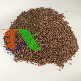 Ảnh của Hạt giống rau mầm Củ Cải Trắng Gói 500g, Hạt giống New Zealand, Đà Lạt