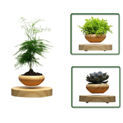 Picture for category Air bonsai