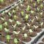 Picture of Khay nhựa ươm cây 50 lỗ, Vỉ ươm hạt giống, Khay nhựa PVC ươm hạt rau hoa