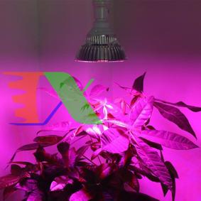 Picture of Đèn trồng cây, Đèn led trồng rau trong nhà, Led grow lights 50W-E27, Đèn quang hợp, Đèn tăng trưởng thực vật