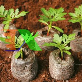 Ảnh của Viên nén xơ dừa ươm hạt giống, Viên nén mụn cám dừa ươm cây con, Viên nén sơ dừa ươm cây non
