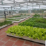 Ảnh của Đất sạch Sông Hồng, Đất phù sa (10 kg), Đất màu trồng rau, trồng cây hoa