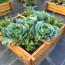 Picture of Đất Tribat dinh dưỡng 20dm3, Đất trồng cây có kèm phân bón, Trồng rau mầm, Rau, Hoa
