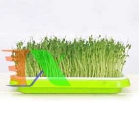 Picture of Khay trồng Rau mầm Thủy canh MAM-100, Chậu trồng Rau mầm 2 lớp