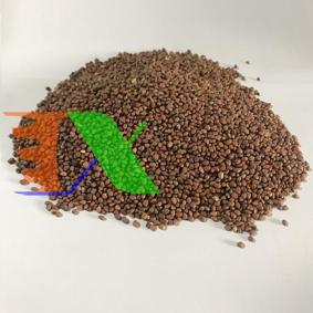 Ảnh của Hạt giống rau mầm Củ Cải Trắng Gói 200g, Hạt giống New Zealand, Đà Lạt