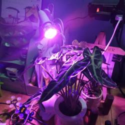 Hình ảnh cho danh mục Phụ kiện đèn