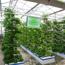 Ảnh của Dung dịch thủy canh cho rau ăn lá 1000AL, Dinh dưỡng thủy canh trồng rau 1l * 2, Phân bón thủy sinh