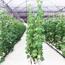 Picture of Dung dịch thủy canh cho hoa củ quả 1000CQ, Dinh dưỡng thủy canh trồng rau 1l * 2, Phân bón thủy sinh