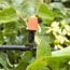 Ảnh của Bộ Kit 16 Đầu béc phun sương 10lit đầy đủ dây, phụ kiện TX-DIY-041, Bộ tưới vườn, hoa lan, rau tự lắp DIY