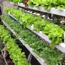 Ảnh của Rọ trồng thủy canh D57. Rọ nhựa thủy canh, Cốc trồng rau thủy canh, Rọ đựng giá thể thủy canh