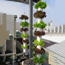 Picture of Tai khí canh TKC-38, Cốc trồng khí canh, Tai trồng thủy canh trụ đứng, Rọ khí canh
