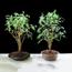 Ảnh của Hạt đất nung, Sỏi nhẹ, Đất sét nung (Bịch 5 lit - dm3), Sỏi nhẹ trồng lan, Giá thể trồng cây