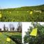 Picture of Băng keo dính bẫy Ruồi vàng KR-2015, Tấm dính Ruồi Muỗi Ong, Keo bẫy Ruồi Dấm